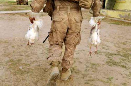 A Marine carries two chickens back from a bazaar near the Yellow Schoolhouse in Marjah, Afghanistan. The birds became part of dinner for at least 10 hungry Marines.