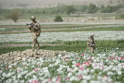 Marines patrolling poppy field in Afghanistan
