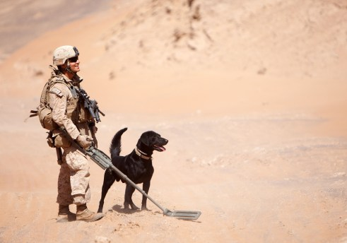 The complete IED detection team
