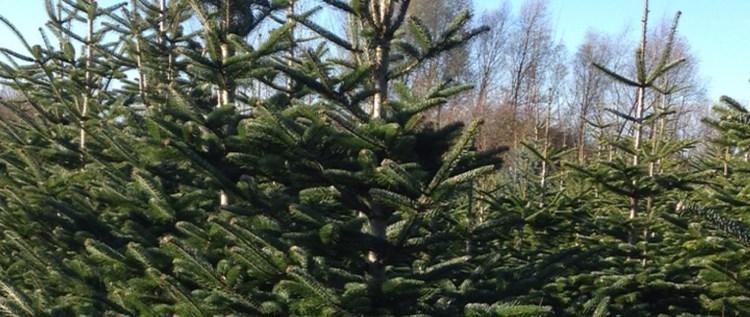 Weihnachtsbaum-04