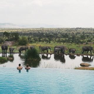 Serengeti'de Safari