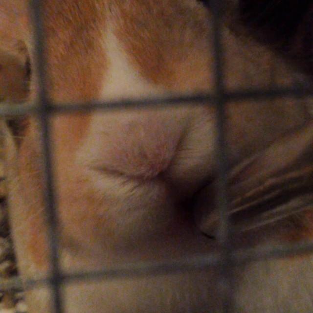 Bay bunny drinking up!