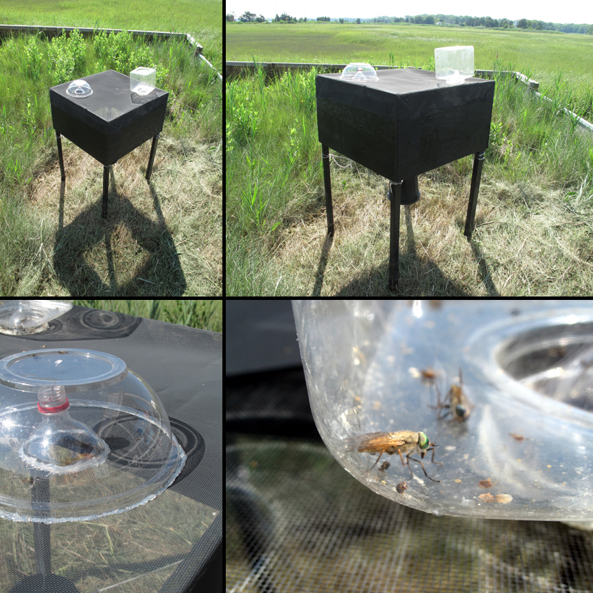 Our greenhead fly Trap