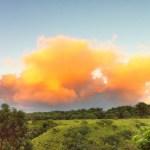 Tangerine Dream, Maui Style