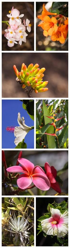 Maui Botanic Gardens - Enchanted Floral Garden