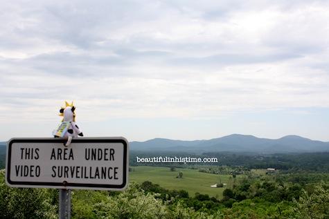 17 chickfila cow scenic overlook b