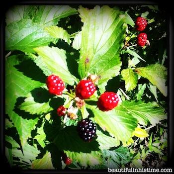 19 blackberries