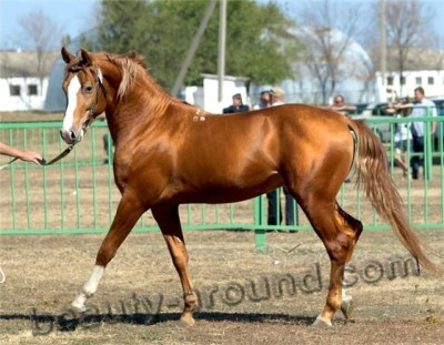 Top-25 Most Beautiful Horse Breeds. Photo Gallery