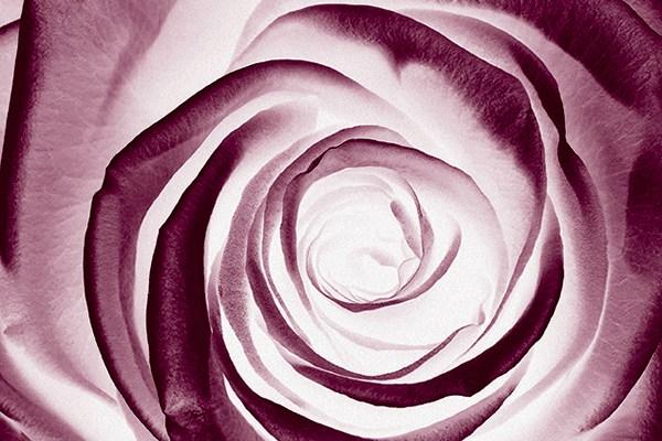 anti-age-rosa-nera-sisley