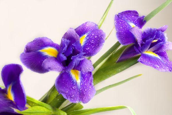 Photo: courtesy www.flowermeaning.com