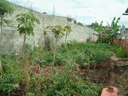 gardenfromcompost