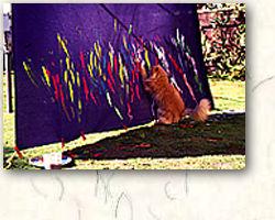 Cat art in action