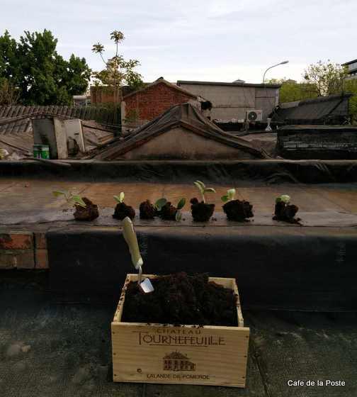 cafe de la poste rooftop garden beixinqiao beijing china