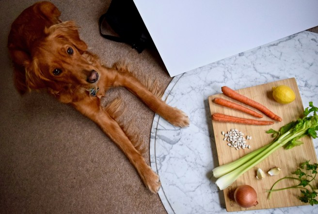 Gordon Johnson sticking his paws in an ingredient shot for homemade vegetable soup.