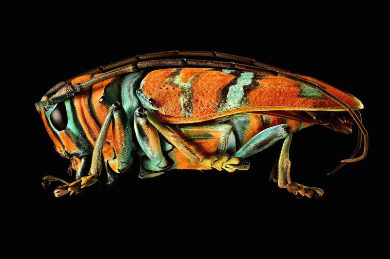LevonBiss serangga makro 4