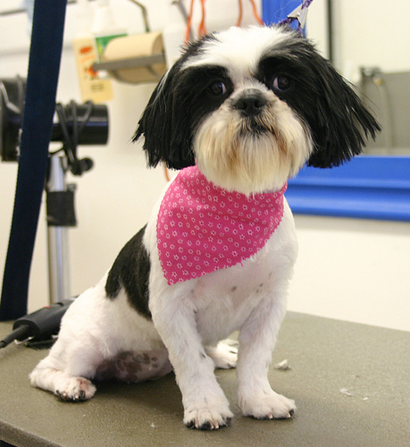 Dog Grooming Offers Cardiff