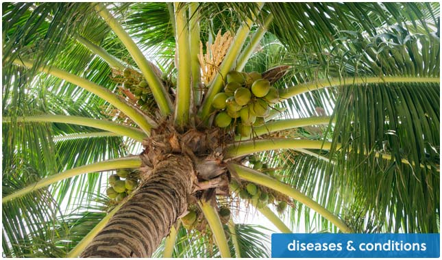 coconut oil for diseases & conditions