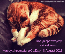 Cat Pet Inspiration International Cat Day awareness day