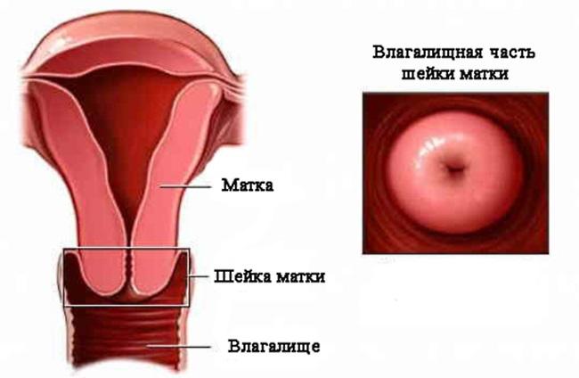 Беременность Девственницы