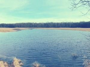 Spandauer Forst.