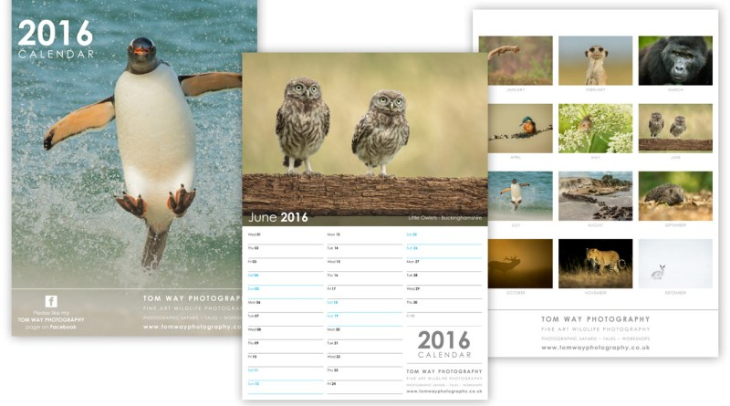 wildlife-photograpy-calendar-design