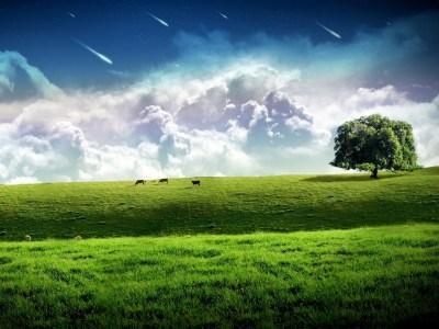 Download Wallpaper 1024x768 Meteor across the sky, green grass HD Background