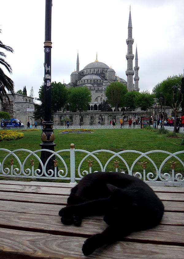 Schwarze Katze schläft vor der Blauen Moschee in Istanbul auf einer Bank