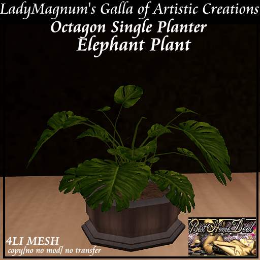BHD LadyMagnum's Octagon Single Planter - Ebony Elephant Plant