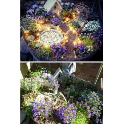 Captivating Diy Ideas Fall Fairy Garden Ideas Fairy Garden Ideas One Should Know Fairy Garden Ideas One Should Know
