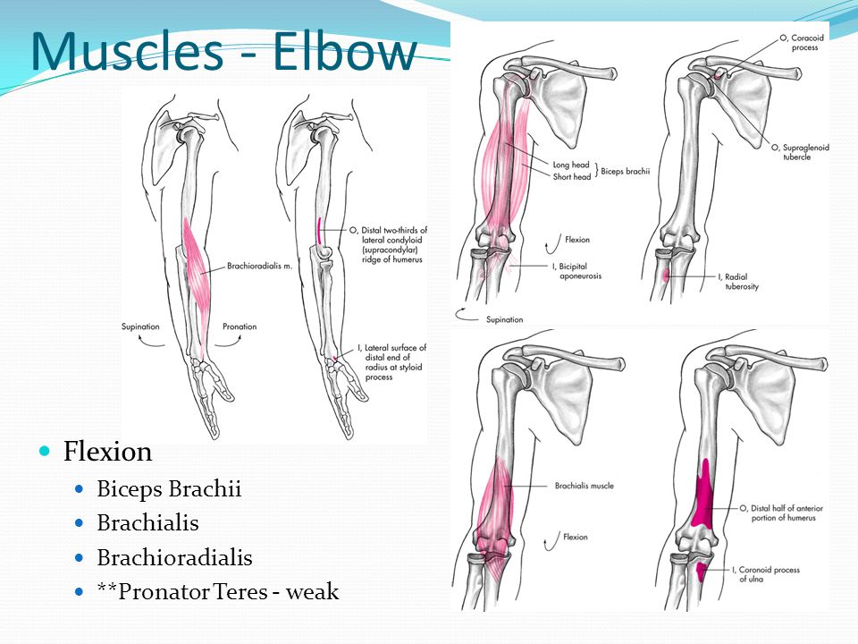 Elbow Flexion Diagram - Imaia.co.uk •