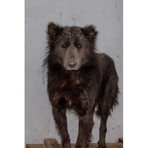 Medium Crop Of Wolf Like Dogs