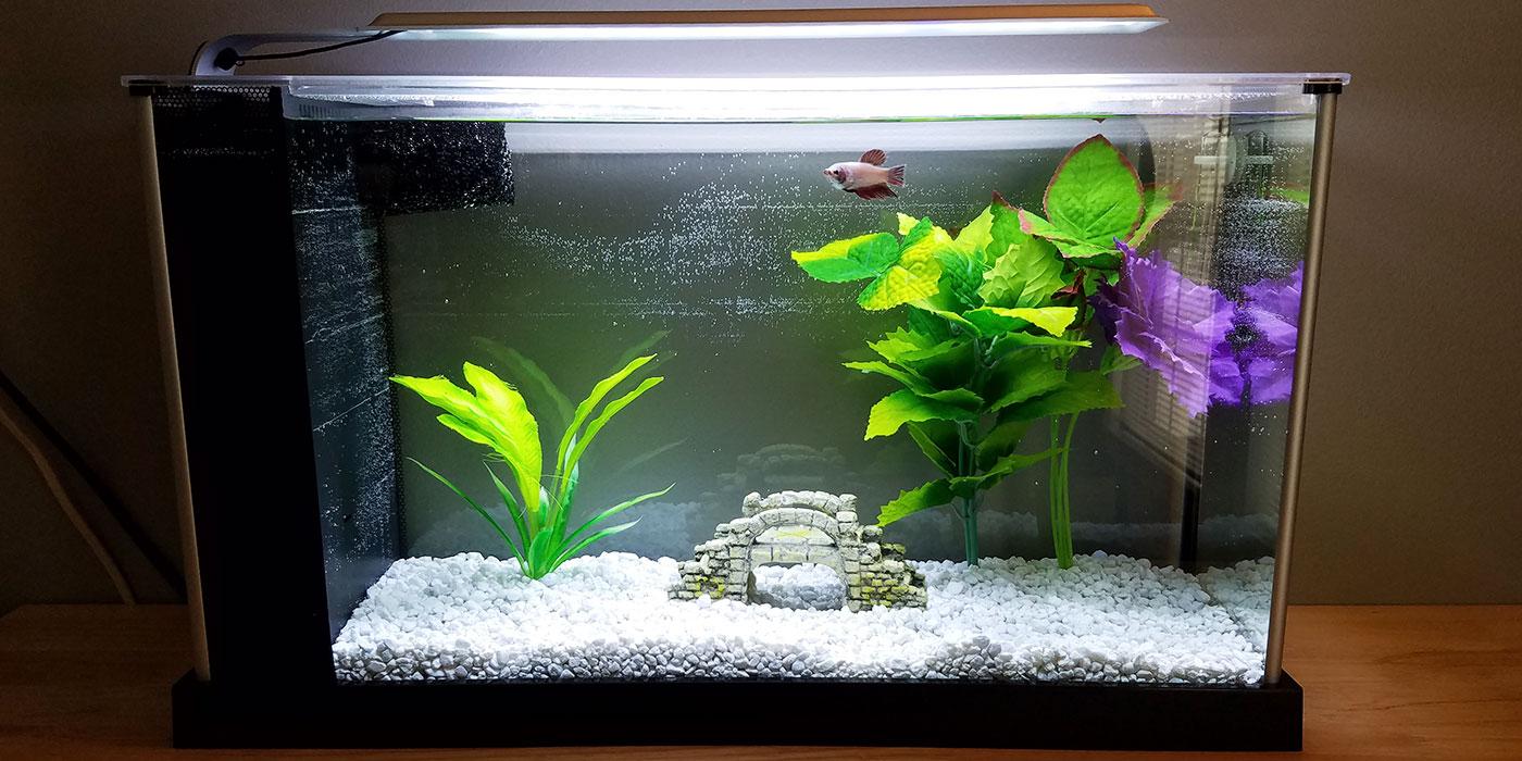 Fullsize Of Betta Fish Bowl