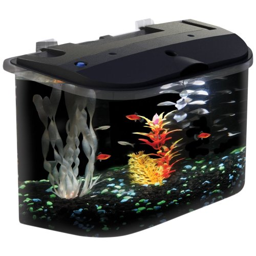Medium Crop Of Betta Fish Water Temp
