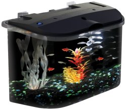 Small Of Betta Fish Water Temp