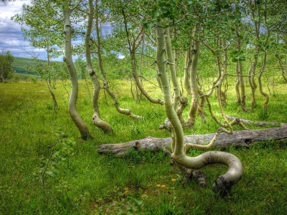 aspen-grove-oregon_8607_990x742