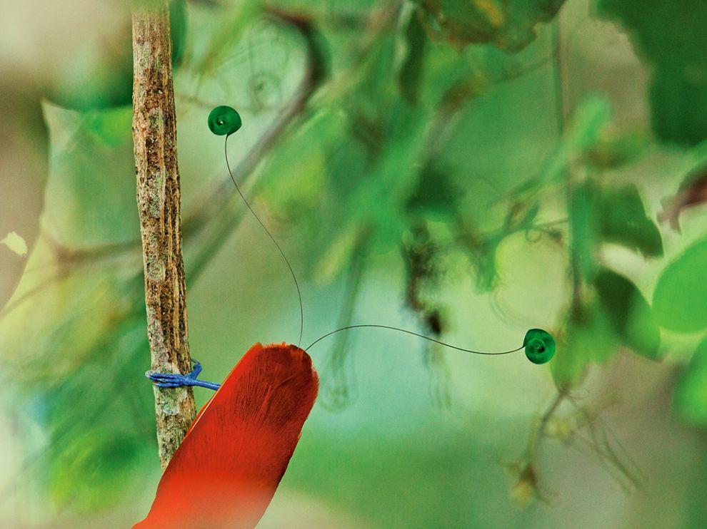 king-bird-laman_64692_990x742