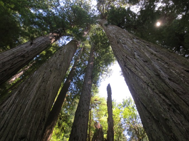 Looking up at Giants