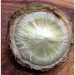 Small Crop Of Frozen Artichoke Hearts