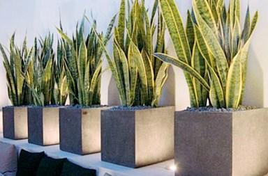 植物界的丹寧風7