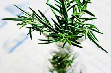 綠化水耕植物_BetweenGos-1