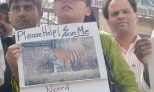 File Photo of Sheela Masood