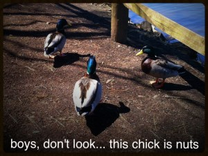 crazyducks