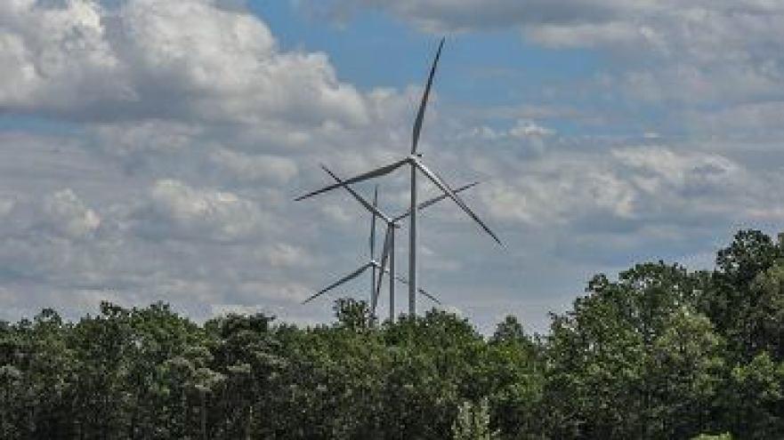 Wytną kilkaset drzew, żeby przewieźć łopaty i turbiny do farmy wiatrowej. Pogotowie dla drzew interweniuje
