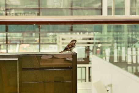 Mangostin_Airport_Biancas_Tasty_Tour_Flughafen_49_Fotor