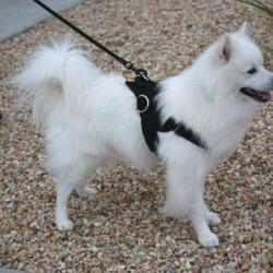 Strong, Quality Dog Harness Strap