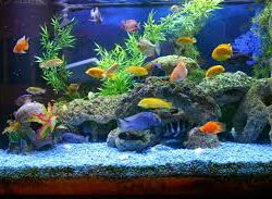 aquarium in nairobi