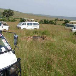 Game drive in Maasai mara park