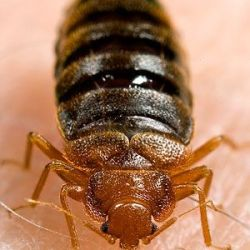 photogallery_get_rid_of_bedbugs_01_full