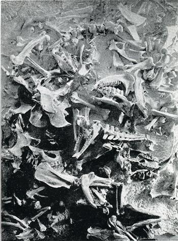 Boneyard350-2.jpg