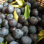Wild Damson Vodka